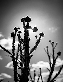 Eroico - music, photography