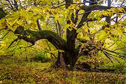 Magnitude - toamna, autumn, autumn pastels, photography, mistifique, magnitude