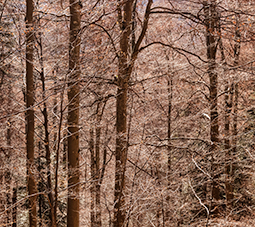 Awaiting Winter - forest, whispers of the forest, photography