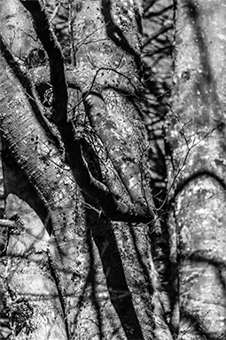 Crippling Chaos - trees, forest, whispers of trees, photography