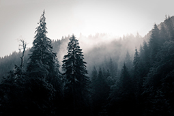 Good Morning Trees - Study I - trees, forest, whispers of trees, photography