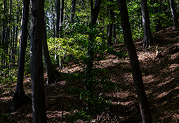 Growth and Undergrowth - trees, forest, whispers of trees, photography, growth, undergrowth
