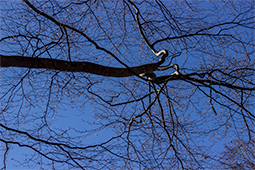 Tie a knot - trees, forest, whispers of trees, photography