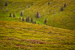 Heirlooms of the Alpine Meadow - Study II - green, nature, little ones, a green world, green world
